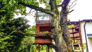 Tree-houses-depict-the-best-vacation-spot-for-tourists
