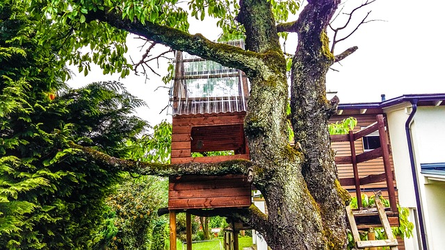 Tree houses depict the best vacation spot for tourists