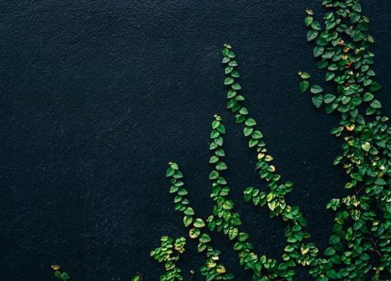 walls-image