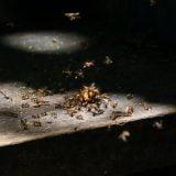 DIY vs. Professional Ant Control
