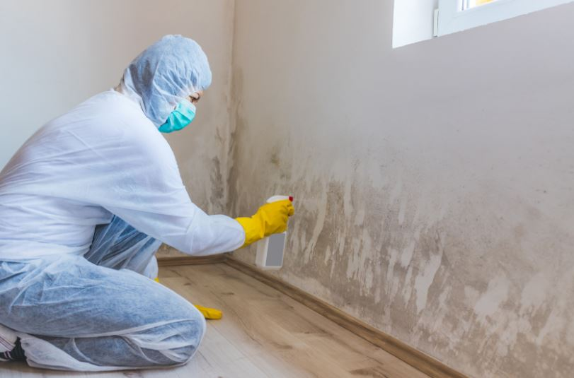 4 Common Myths about Mold in the Home