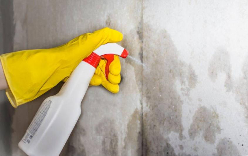 Mold Remediation Services: Here's Why You Shouldn't Do It Yourself