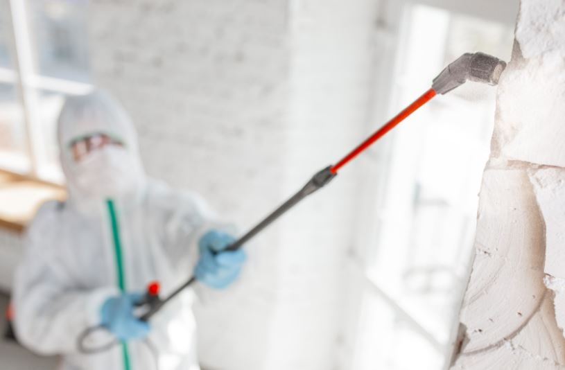 Distinctions Between Mold Remediation Services and Mold Removal